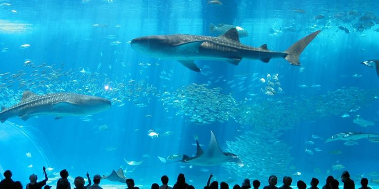 The 10 Biggest Aquariums In The World (Ranked By Size)
