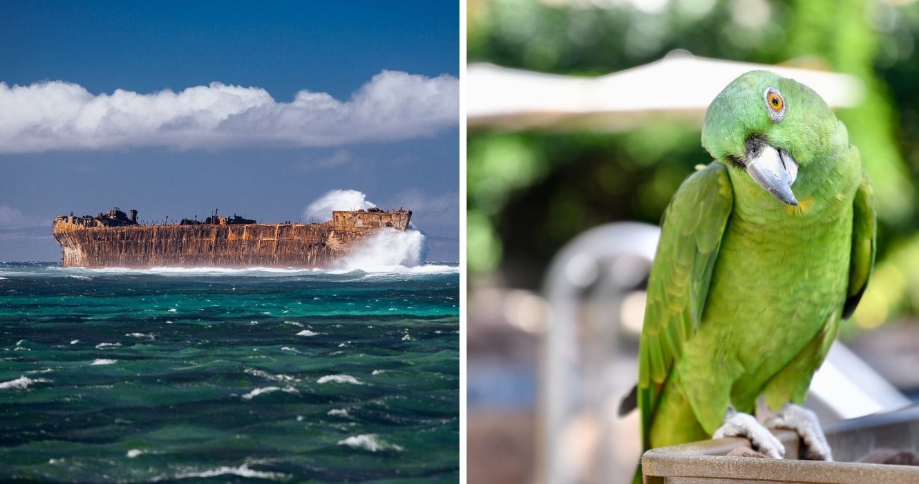 How To Spend An Unconventional (But Amazing) Day On Hawaii's Island Of Lanai