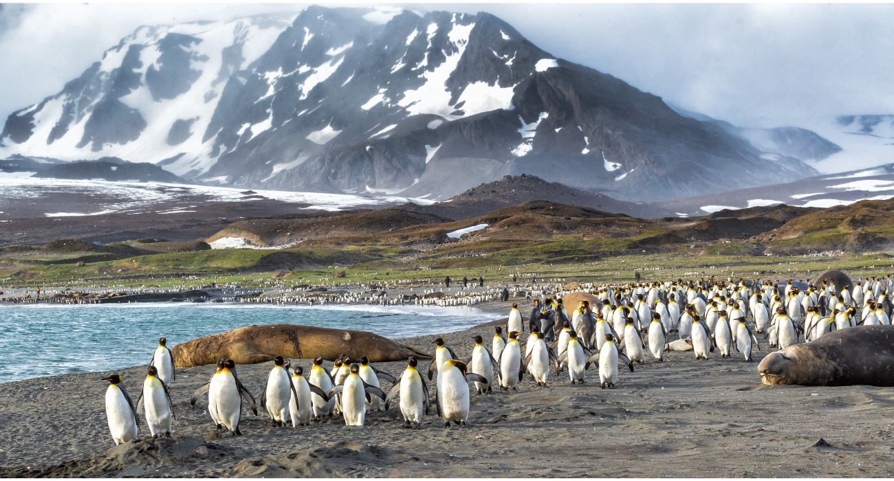 The Sub Antarctic Islands: Remote, Frozen And Teeming With Wildlife