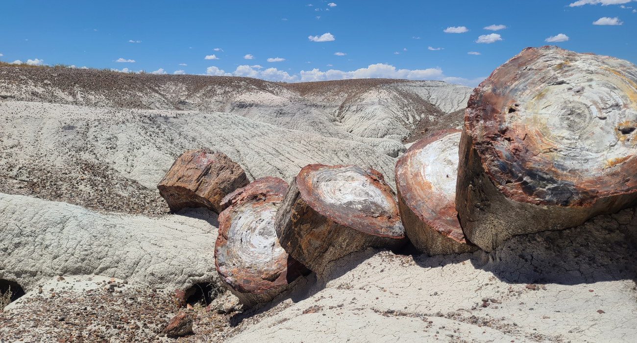 Visiting Petrified Forest National Park: Home Of Petrified Woodland, Fossils, And Petroglyphs