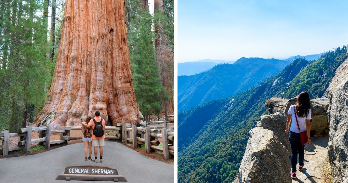 Guide to Sequoia National Park And General Sherman (The Largest Living Tree On Earth)