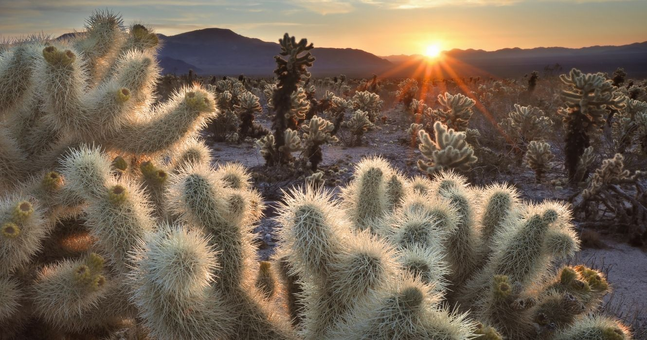 These Are The Best Hikes Through Joshua Tree National Park