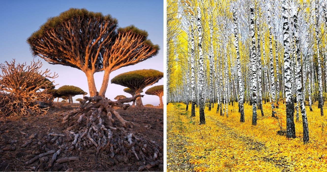 Visits To These Iconic Trees From Around The World Are Worth Your Time (And Reverence)